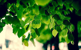 green tree foliage wallpaper 1920x1200 30539