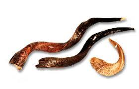 buy shofar tips on picking out the right shofar ram s horn for you bald