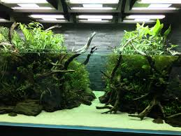 Japanese Aquascape by Lovely Little 6 Gallon Tree Tank Aquascapes Pinterest