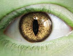 iris illuminati the secret do reptilian human hybrids run our world