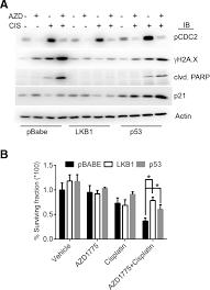 wee1 kinase inhibitor azd1775 has preclinical efficacy in lkb1