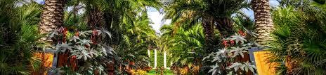 palmengarten im kurpark von bad pyrmont unknownplaces net