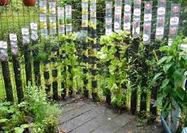 sealed bottle garden 8 ways to grow in coke bottles garden culture magazine