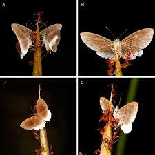 we discovered published a butterfly history
