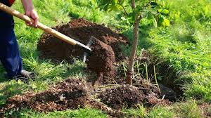 4 things you need to to plant a new tree gardening tips