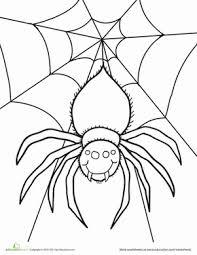 spider worksheet education
