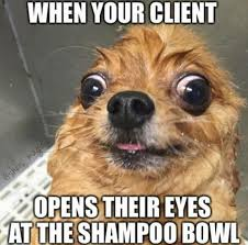 Puppy Eyes Meme - 27 memes that will make every hairstylist actually lol