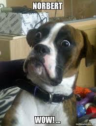 norbert wow skeptical dog make a meme