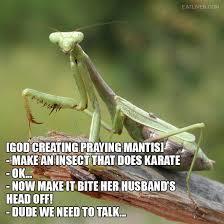 Mantis Meme - 45 best all mantis all the time images on pinterest praying mantis