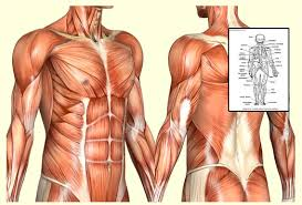 Anatomy And Physiology With Lab Online Anatomy And Physiology Course Online Free At Best Anatomy Learn