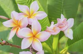 imagenes flores relajantes las 4 flores más fragantes del mundo vix