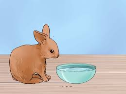 how to feed baby rabbits 11 steps with pictures wikihow