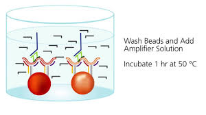 quantigene plex assay thermo fisher scientific