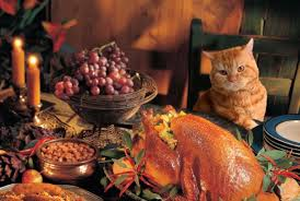 thanksgiving cat jpg