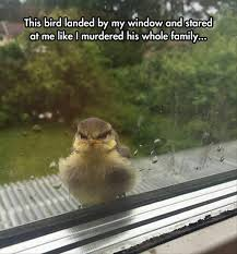 Crazy Bird Meme - angry bird album on imgur