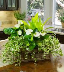 indoors garden houseplant garden diy