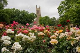 Botanical Gardens In Nc by Duke Chapel In Durham Nc Stock Photo Picture And Royalty Free