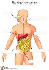 free digestive system worksheet www homeschoolgiveaways com free
