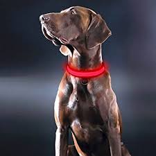 light up collar amazon amazon com higo led dog collar usb rechargeable light up