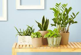 5 indoor houseplants you can u0027t kill u2013 p u0026g everyday p u0026g everyday