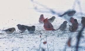 prairie rose u0027s garden gbbd counting birds not blooms