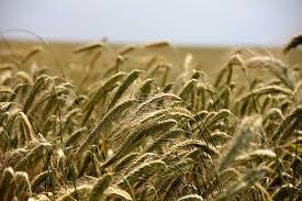 chambre d agriculture vienne motion chambre d agriculture présentée par le groupe des élus de