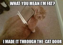 Silly Meme - 47 best funny memes images on pinterest funny memes memes humor