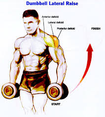What Muscle Do Bench Press Work The Rear Lateral Raise Is One Of The Best Exercise For Posterior