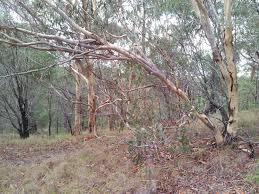 brisbane koala bushland reserve and buhot creek reserve transventure