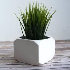 20 best inside plants images on pinterest inside plants modern