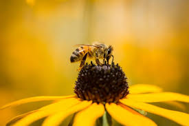 Flowers Bees Pollinate - flowers that attract bees new england today