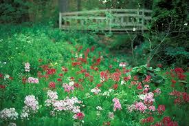 Michigan Botanical Gardens Michigan Wildflower Landscape Photograph Fernwood Botanical