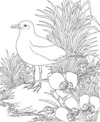 seagull garden coloring free printable coloring pages