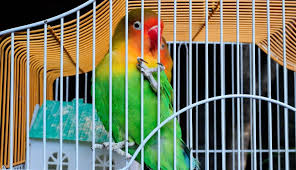 hola como puedo hacer unas alas de pato para nia de 4 curar una herida a un pájaro