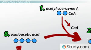 prentice hall biology chapter 9 cellular respiration videos