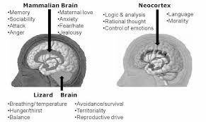 What Portion Of The Brain Controls Respiration Your Primer To The Psychology Of Marketing And Emotional Buying