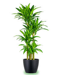 the top 10 most air purifying house plants plants gardens and