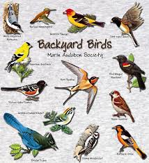 backyard bird identifier ct outdoor