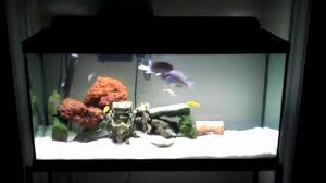 sunken ship theme aquarium cichlid tank