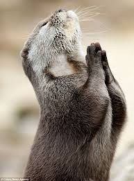 Otter Meme - the praying otter meme christian funny pictures a time to laugh