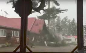lightning strikes destroys tree in front of guys filming they go