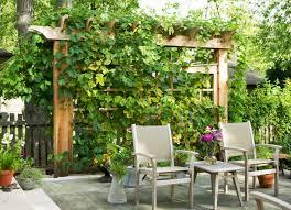 Backyard Privacy Ideas Cheap Privacy Ideas For Backyards Home Design Screen Small Backyard