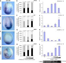self u2010regulation of stat3 activity coordinates cell u2010cycle