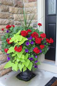 Potted Plant Ideas For Patio by Best 20 Geraniums Ideas On Pinterest Geranium Plant Geranium