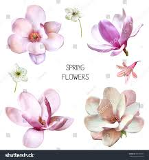 Image Of Spring Flowers by Illustration Beautiful Blue Pink Flowers Set Stock Illustration