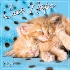 Grumpy Cat Mini Wall Calendar - 2018 wall calendar grumpy cat calendars 2018 9 38 picclick uk