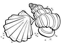 168 shells images drawings sea shells