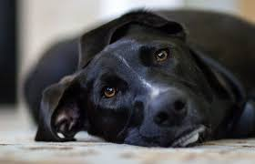 Causes Of Sudden Blindness In Dogs What Causes Seizures In Dogs Canna Pet