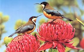 bird wallpapers beautiful small birds wallpapers entertainment only