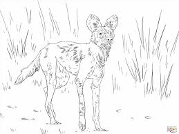 wild animal coloring pages feed